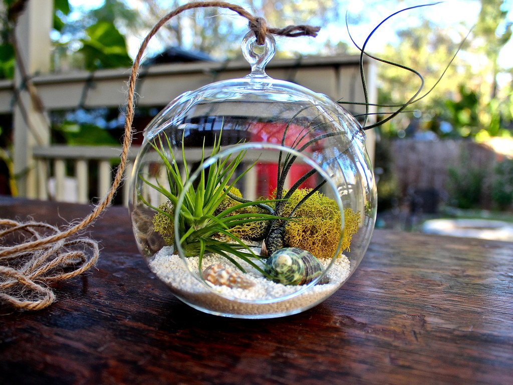 DIY Colorful Terrarium Ideas
